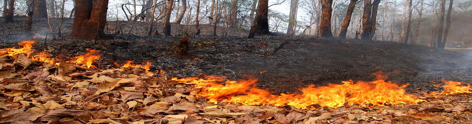 images/slider/Forest_fire_mae_hong_son_province_01.jpg